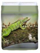 Green Iguana Iguana Iguana, Tarcoles Duvet Cover