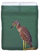 Juvenile Black Crowned Night Heron Duvet Cover