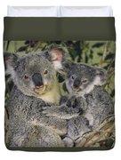 Koala Phascolarctos Cinereus Mother Duvet Cover by Gerry Ellis