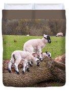 Lambs Duvet Cover
