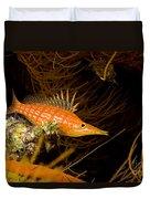 Longnose Hawkfish Duvet Cover