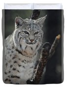 Lynx Perched In A Tree Duvet Cover