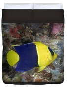 Malaysia Marine Life Duvet Cover by Dave Fleetham - Printscapes