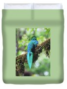 Male Quetzal Duvet Cover