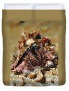 Marine Hermit Crab Duvet Cover