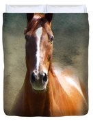 Misty In The Moonlight P D P Duvet Cover