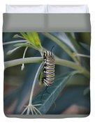 Monarch Catterpillar  Duvet Cover