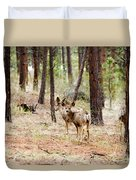 Mule Deer In The Pike National Forest Duvet Cover