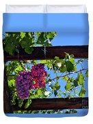 Napa Valley Inglenook Vineyard -2 Duvet Cover
