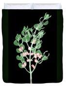 Pacific Mistletoe, Phoradendron Duvet Cover