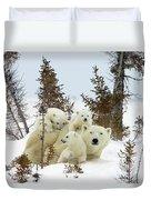 Polar Bear Ursus Maritimus Trio Duvet Cover by Matthias Breiter