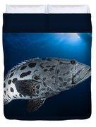 Potato Grouper, Australia Duvet Cover