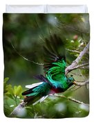 Quetzal In Costa Rica Duvet Cover