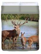 Red Deer In Bushy Park London Duvet Cover