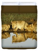 Reflected Lions Duvet Cover