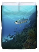 School Of Tarpon, Bonaire, Caribbean Duvet Cover by Terry Moore