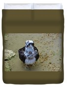 Sea Hawk Standing In Shallow Water Duvet Cover