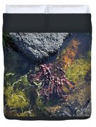 Seaweed Growing In A Rockpool On The Shore Roundstone County Galway Ireland Duvet Cover