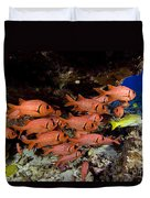 Shoulderbar Soldierfish Duvet Cover