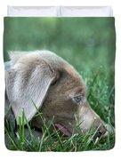 Silver Labrador Retriever Puppy  Duvet Cover