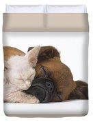 Small Brabant Griffon, Petit Brabancon, Puppy Dog With Laperm Kitten Duvet Cover