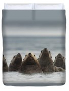 Stellers Sea Lion Eumetopias Jubatus Duvet Cover by Michael Quinton