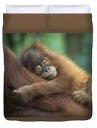 Sumatran Orangutan Pongo Abelii Two Duvet Cover