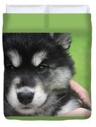 Up Close Look At The Face Of An Alusky Puppy Dog Duvet Cover