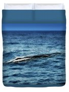 Whale Watching Balenottera Comune 3 Duvet Cover