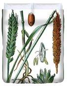 Wheat, Triticum Vulgare Duvet Cover