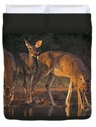 Whitetail Deer At Waterhole Texas Duvet Cover