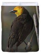 Yellow Headed Blackbird On Cattails Duvet Cover
