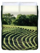 Young Soybean Plants Duvet Cover