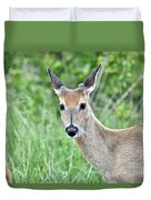 Young White-tailed Buck In Velvet Duvet Cover