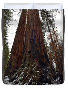 Giant Sequoia Trees Duvet Cover