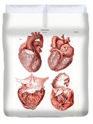 Heart, Anatomical Illustration, 1814 Duvet Cover