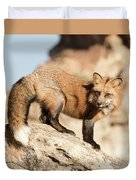 Red Tailed Fox Duvet Cover