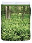 146112 Ferns In Pisgah Nat Forest V Duvet Cover