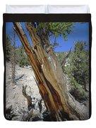 1n6956 Methuselah Tree Duvet Cover
