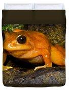 Chilean Tomato Frog Duvet Cover
