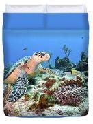 Hawksbill Turtle Feeding On Sponge Duvet Cover by Karen Doody