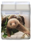 Hoffmanns Two-toed Sloth Choloepus Duvet Cover