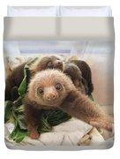 Hoffmanns Two-toed Sloth Choloepus Duvet Cover by Suzi Eszterhas