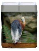 Javan Pond Heron At Zoo Berlin Duvet Cover