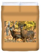 Mule Deer In The Woods Duvet Cover