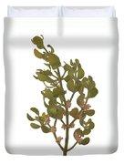 Pacific Mistletoe Duvet Cover