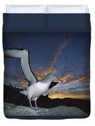 Salvins Albatross At Sunset Duvet Cover