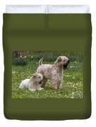 Soft-coated Wheaten Terriers Duvet Cover