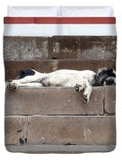 Street Dog Sleeping On Steps Duvet Cover