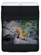 Wild Fox Near Den In Wilderness Animals Duvet Cover